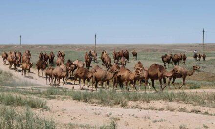 ARTE: Story und Location Scout für 360° GEO-Reportage in Kasachstan