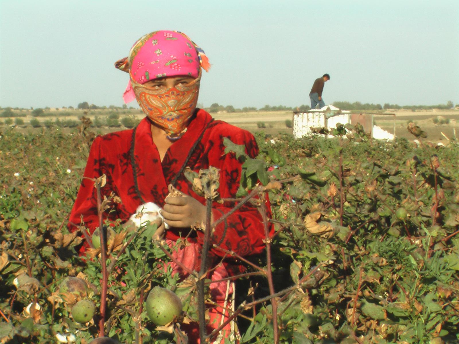 Zwangsarbeit bei der Baumwollernte in Usbekistan. Kaum jemand kann sich den Anordnungen der Behörden entziehen