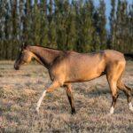 Achal-Tekkiner in Turkmenistan: Im Reich der goldenen Pferde