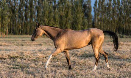 Turkmenistan: Im Reich der goldenen Pferde