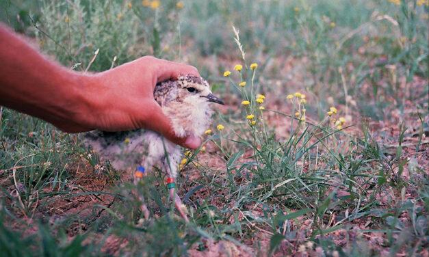 Kasachstan: Vogelparadies ohne Vogelkundler